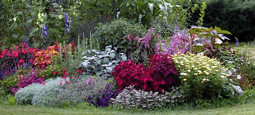 Mixed-perennial-and-annuals-border