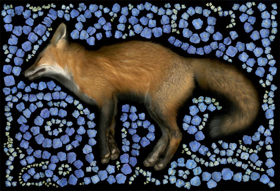 Fox Maze 2013