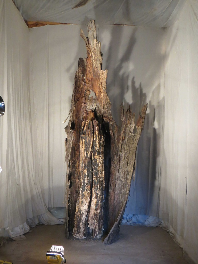 Shelter Tree, Gillian Jagger. Photo by Donna Calcavecchio