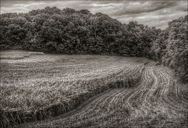 Jerry Freedner, Farm Fields 2