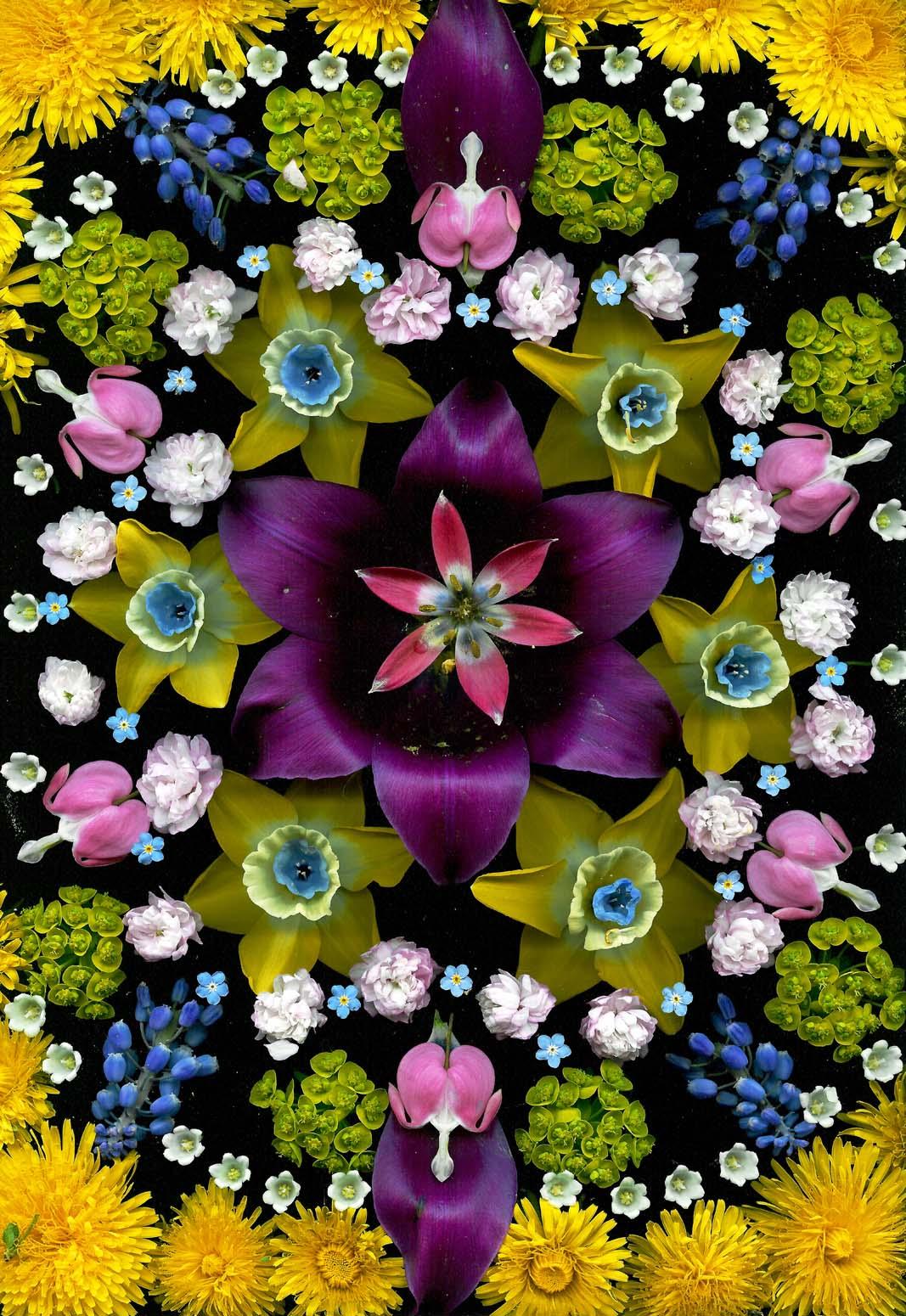 """""""Wild Tulip"""" 2004"""