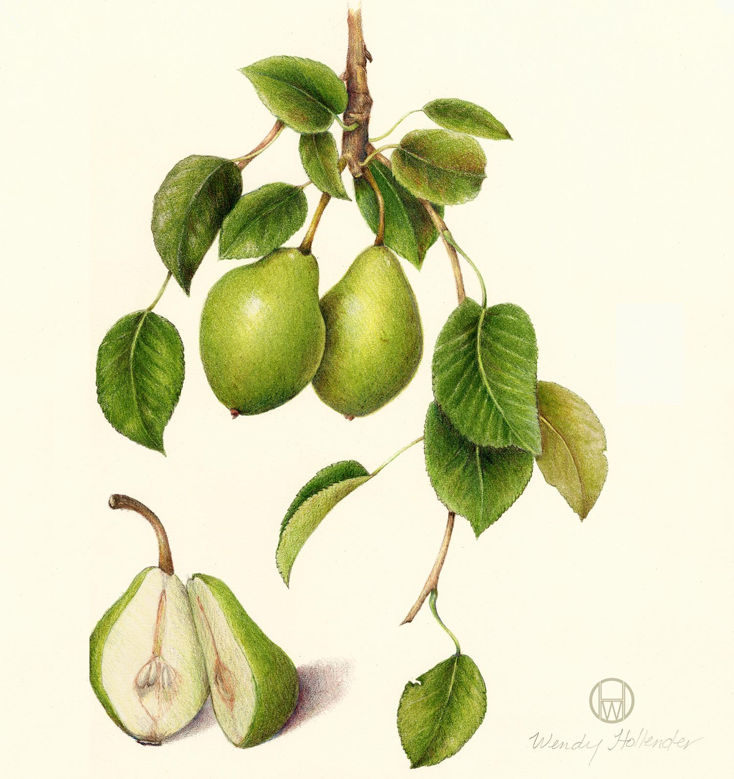 Pear-Pyrus 2