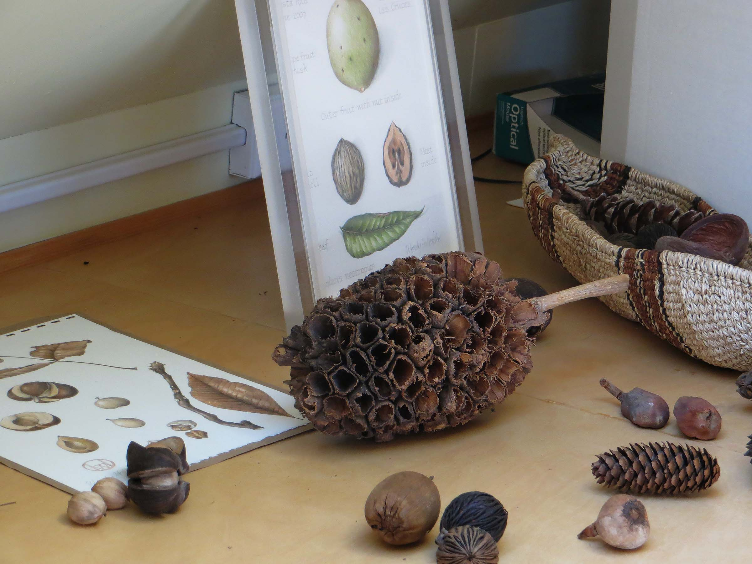 A collection of various seed pods