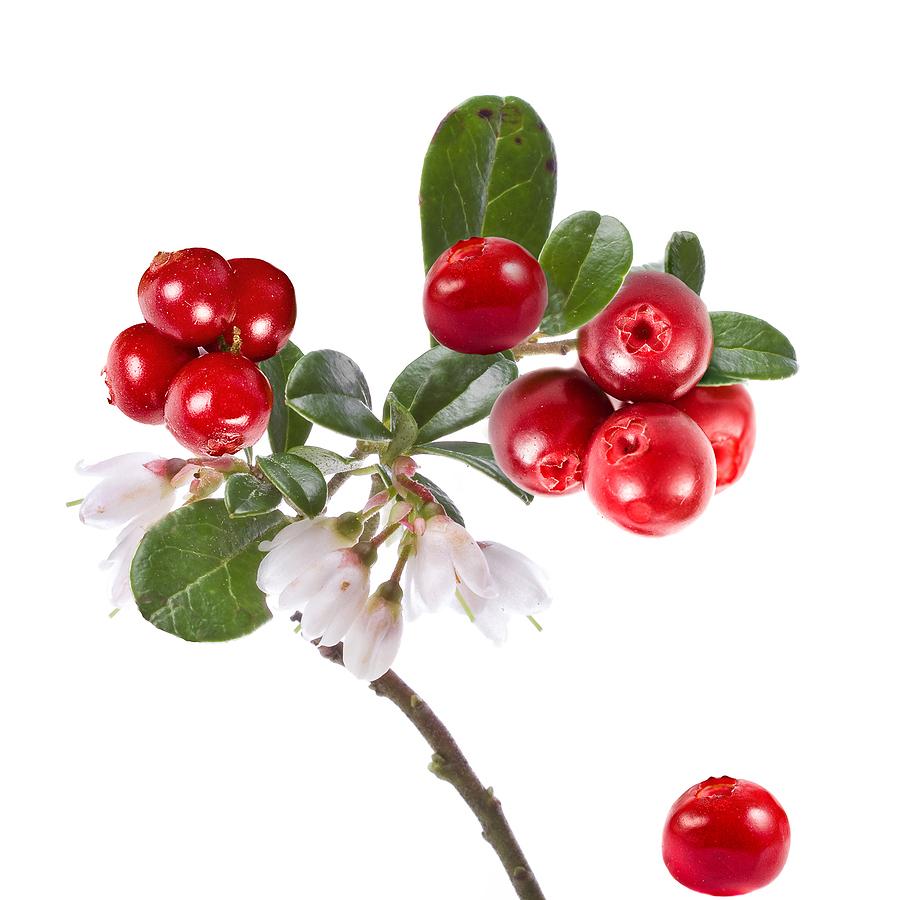 cranberry.7