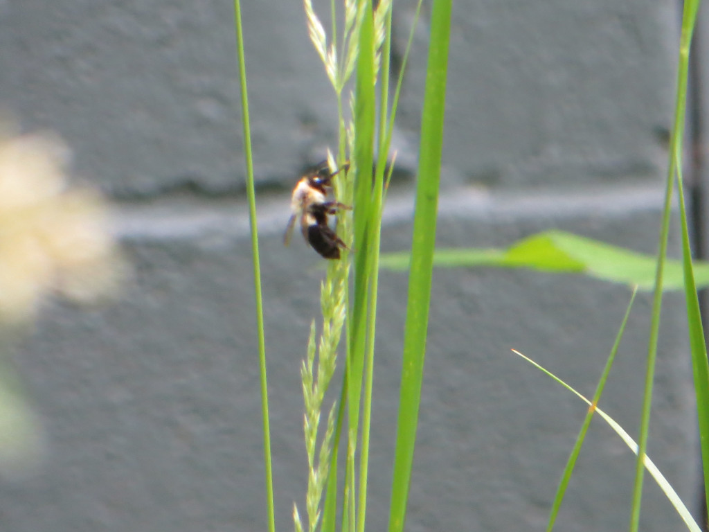 A Bee on grass