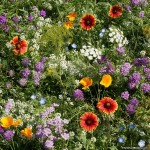 beneficial_bug_wildflower_mix