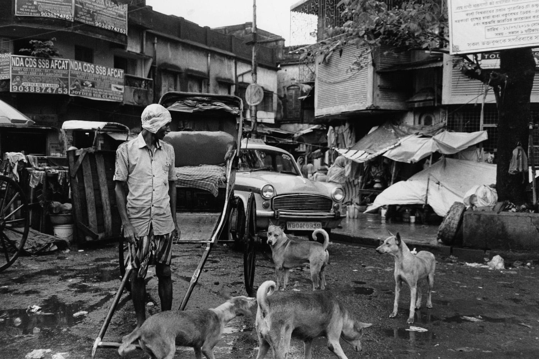KolkataManDogs