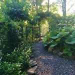 House property garden.sm.crop